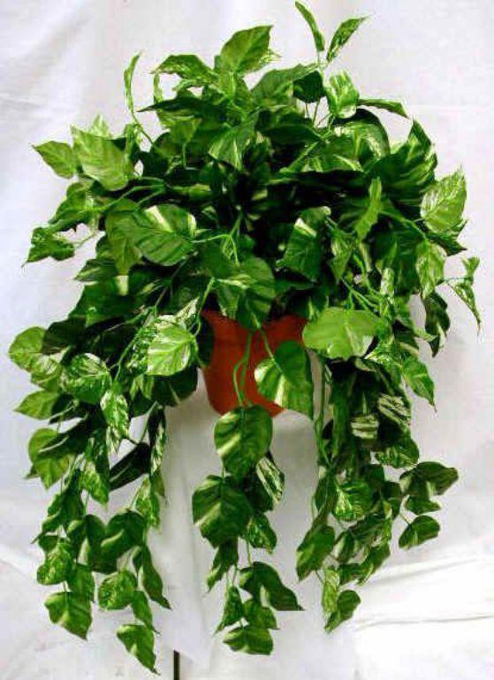 Plantas ornamentales ideas para decora casas y oficinas for Como se llaman las plantas ornamentales