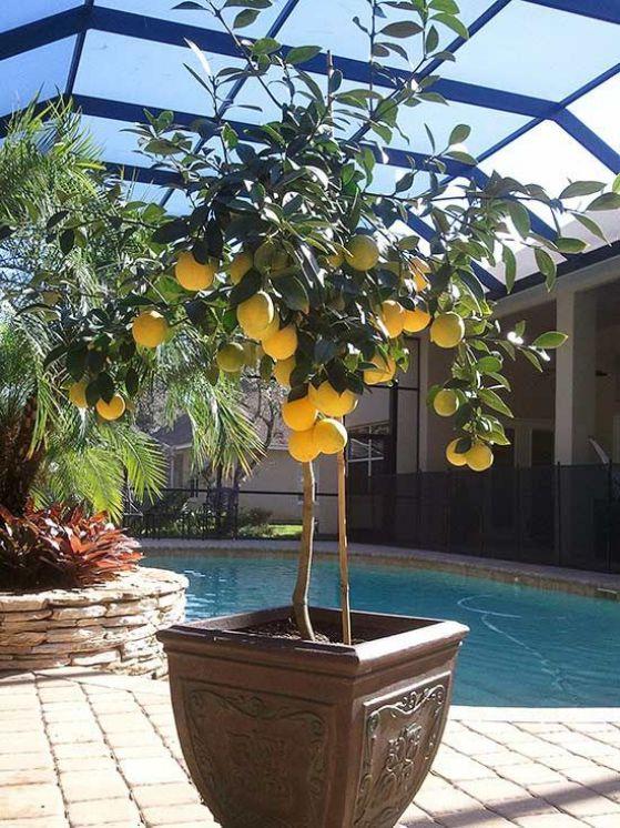 planta ornamental con frutos