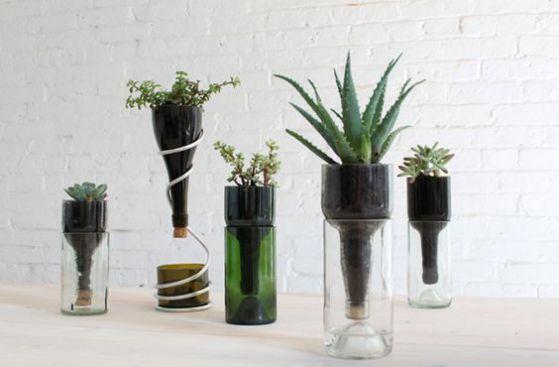 plantas ornamentales diseños alternativos