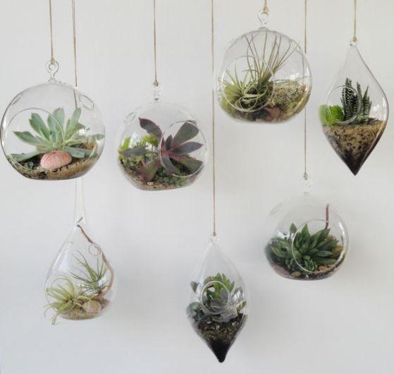 plantas para decorar en casa