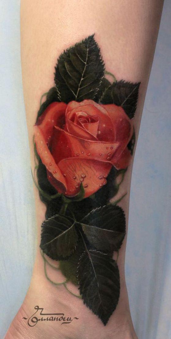 rosa floreciendo
